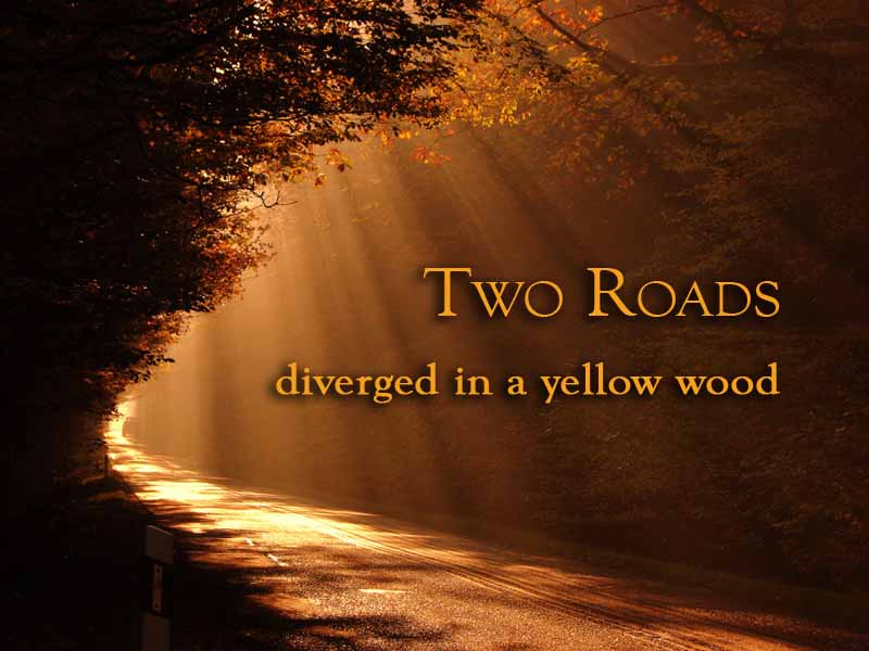 two paths diverged in a yellow wood